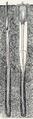 Lingula anatina 001.png