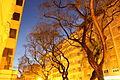 Lisboa - Lisbon (21038693919).jpg