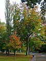 Lister Park (2949395231).jpg