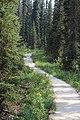 Little Yoho Valley IMG 4883.JPG