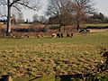 Llamas (2078420820).jpg