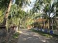 Local Road - Sarkhel Para - Baduria - North 24 Parganas 2012-02-24 2357.JPG