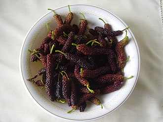 Morus (plant) - Long mulberry