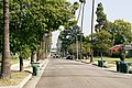 Loose bear being tracked by police in Pasadena, California 01.jpg