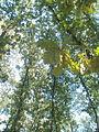 Lunjevac, Lunjevačka šuma, 05.jpg