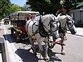 MackinacIsland Carriage.jpg