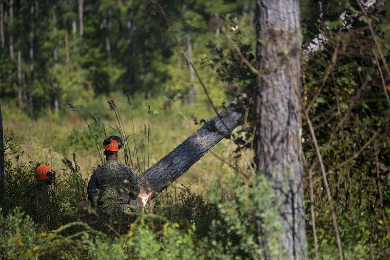 File:Marines face nature head-on 161013-M-GD641-0003.jpg