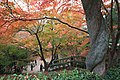 Maruyamacho, Higashiyama Ward, Kyoto, Kyoto Prefecture 605-0071, Japan - panoramio (3).jpg