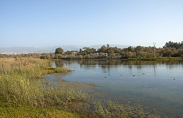 Maspalomas Lagoon C.jpg