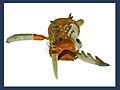 Masque de caribou-morse (musée du quai Branly) (3034832807).jpg