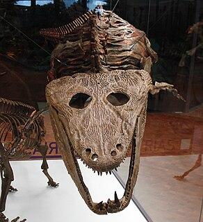 <i>Mastodonsaurus</i> genus of reptiles (fossil)