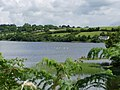 McAuley's lake - geograph.org.uk - 1402396.jpg