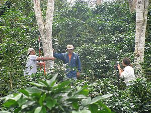 Coffee production in Peru - Carbon monitoring in a Peruvian coffee plantation.
