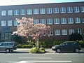 Mehr Frühling - panoramio.jpg