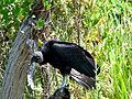 Merritt Island National Wildlife Refuge - Flickr - Rusty Clark (36).jpg