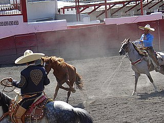 Animal treatment in rodeo