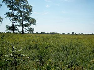 Central forest-grasslands transition - Ecoregion preserve (Midewin -- Illinois)