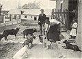 Mikszáth horpácsi birtoka 2 (Vasárnapi Ujság, 1905).jpg