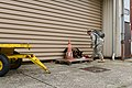 Military working dog and handler practice explosives detection 140729-A-BD610-007.jpg