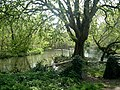 Mill Pond Droxford - geograph.org.uk - 400825.jpg