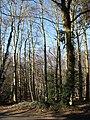 Mixed woodland - geograph.org.uk - 686059.jpg