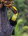 Mmmmm Bananas (16678691165).jpg