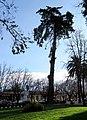 Molina, plaza (37006652962).jpg