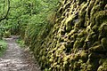Moss-covered Retaining Wall - geograph.org.uk - 801432.jpg