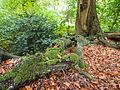 Moss on tree roots (10493528496).jpg