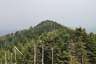 Vyschnuté stromy v lese v dôsledku znečistenia prostredia