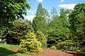 Mount Airy Arboretum - DSC03796.JPG