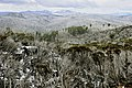 Mount Buffalo N.P. 29.jpg
