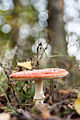 Mushroom (15046792657).jpg