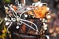 Mushroom on Dead Tree.jpg