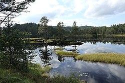 MyrVannSkog.jpg