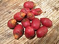 Mysore Areca Nut മൈസൂർ അടയ്ക്ക പഴുത്തത്.JPG