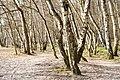 NSG-Boberger-Niederung-29-03-2014-Boberger-Dünenwege 13.jpg