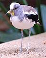 National Aviary (13020411284).jpg