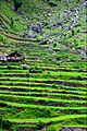 Natural Stairs - Agricultural terraces in Pakistan.jpg
