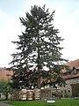 Naturdenkmal Landkreis Kassel 6.33.831 2017-05-07 b.JPG