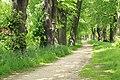 Naturdenkmal Lindenallee in Lößnitz Erzgebirge 2H1A2720WI.jpg