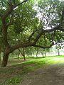 Nature of Punjab University.jpg
