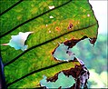 Natureza - HDR (2704487701).jpg