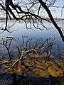 Naturschutzgebiet Großer Rußweiher 01.jpg