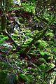 Naturschutzgebiet Neuer Hagen - Urwald (2).jpg