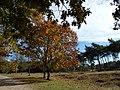 Natuurgebied Ganzenven - panoramio (1).jpg