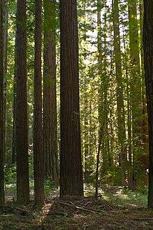 Navarro River Redwoods...