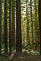 Navarro River Redwoods.jpg