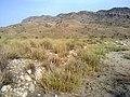 Navidhand new 371 - panoramio.jpg