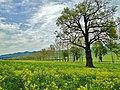 Neamt, Romania - panoramio.jpg
